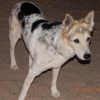Cheyenne  (fur daughter)
